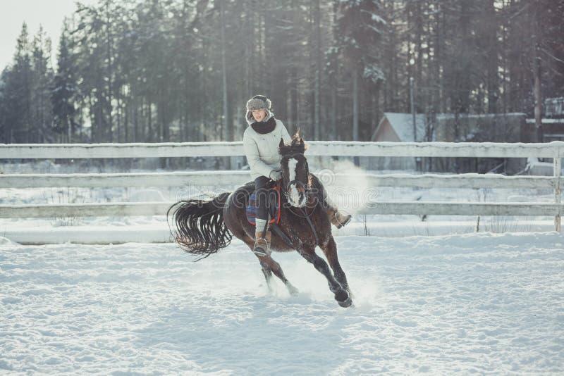 Het paardrit van de de wintersprong het springen stock fotografie