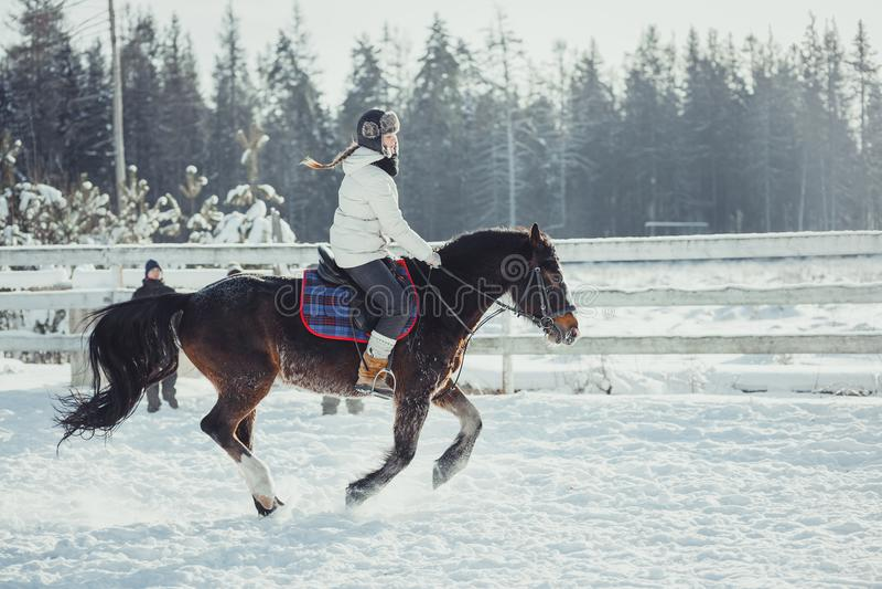 Het paardrit van de de wintersprong het springen royalty-vrije stock fotografie