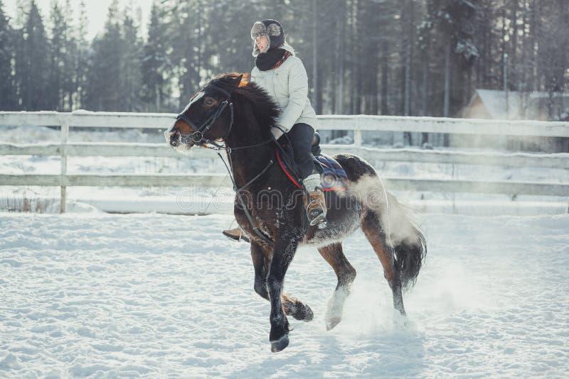 Het paardrit van de de wintersprong het springen stock afbeeldingen