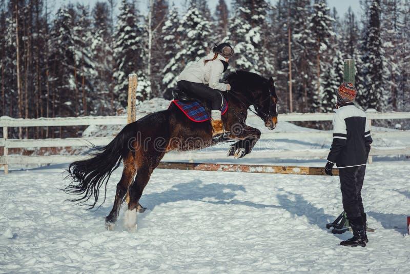 Het paardrit van de de wintersprong het springen stock foto's
