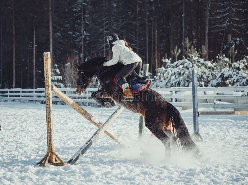 Het paardrit van de de wintersprong het springen royalty-vrije stock afbeeldingen