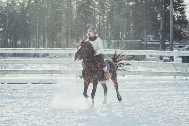 Het paardrit van de de wintersprong het springen stock afbeelding