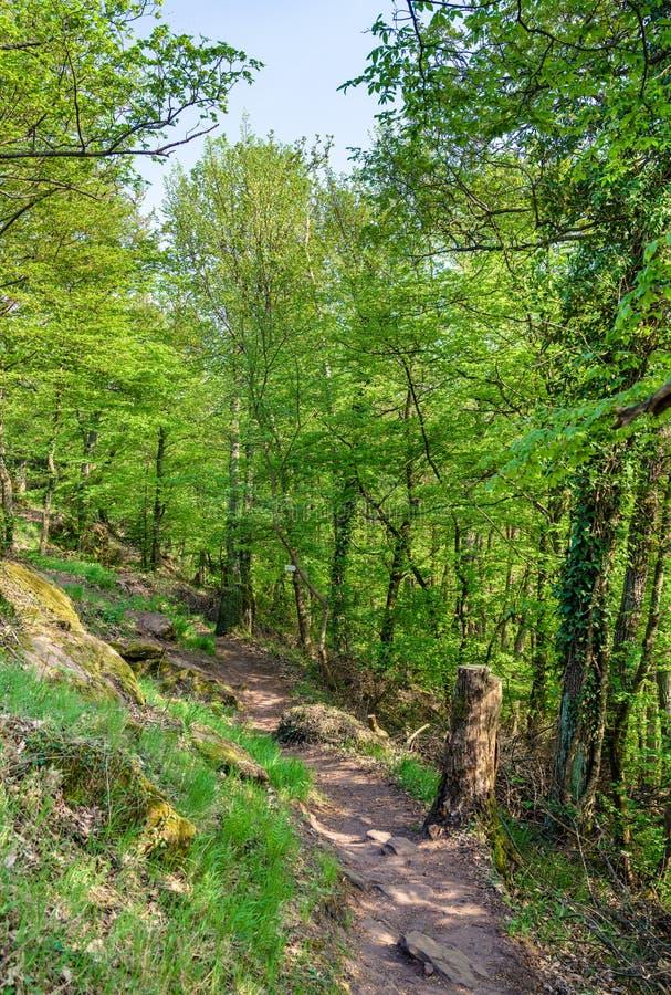 Het Palatinaatbos in de lente duitsland stock foto
