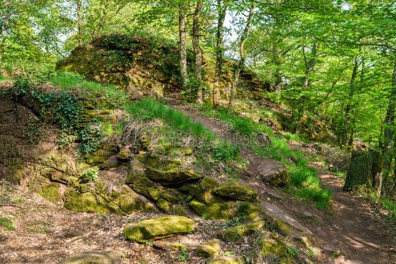 Het Palatinaatbos in de lente duitsland stock afbeelding