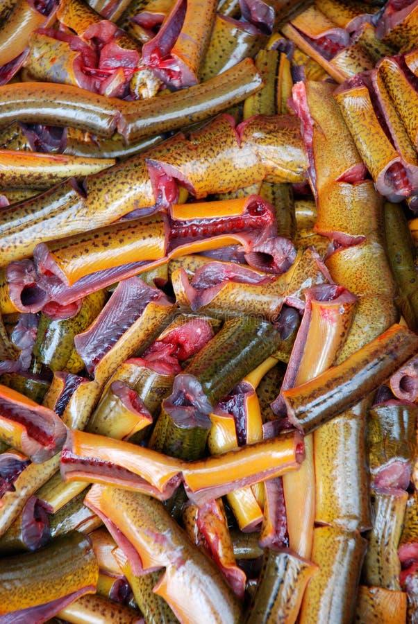 Het palingsvlees royalty-vrije stock afbeelding