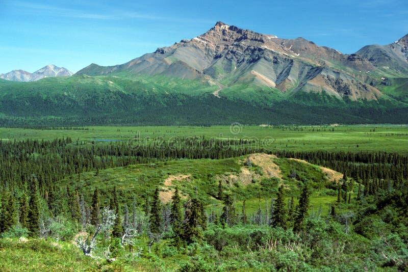 Het Panorama van Alaska stock afbeelding