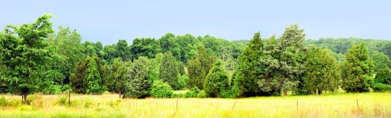 Het panorama van de boom en van het gebied royalty-vrije stock foto