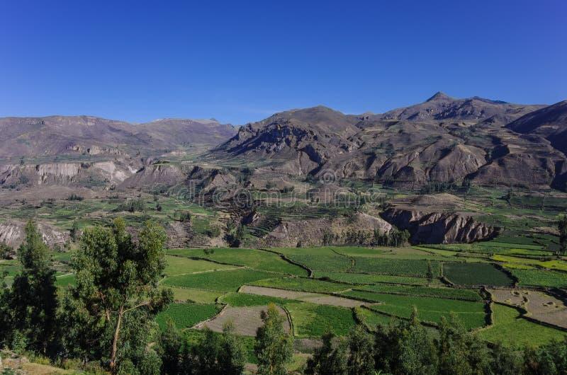 Het panorama van de Colcacanion, Peru, Zuid-Amerika Incas om Landbouwbedrijf te bouwen stock afbeelding