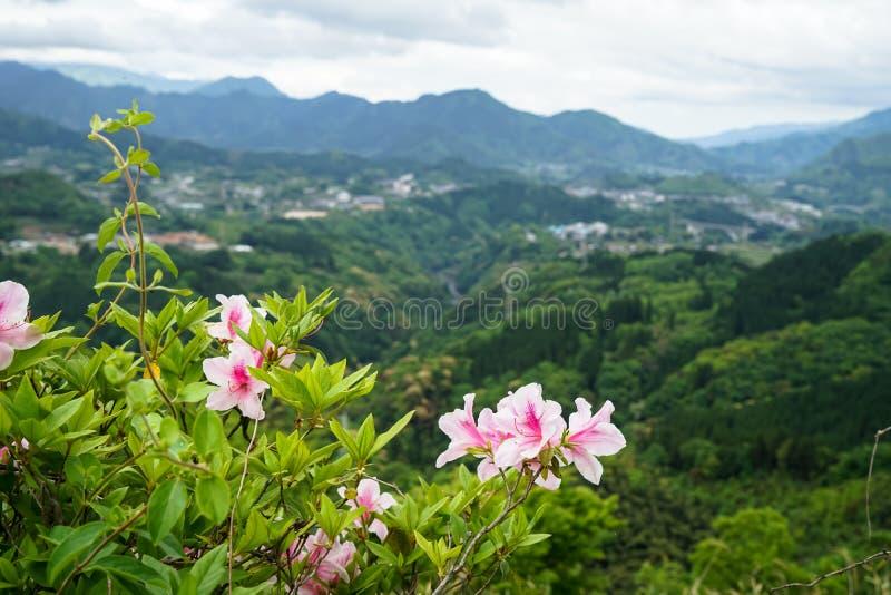 Het panorama van de groenberg en stadsmening van verafgelegen met roze flo stock fotografie