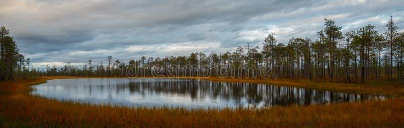 Het panorama van het de herfstlandschap, meer in het moerasland in het bos stock afbeeldingen