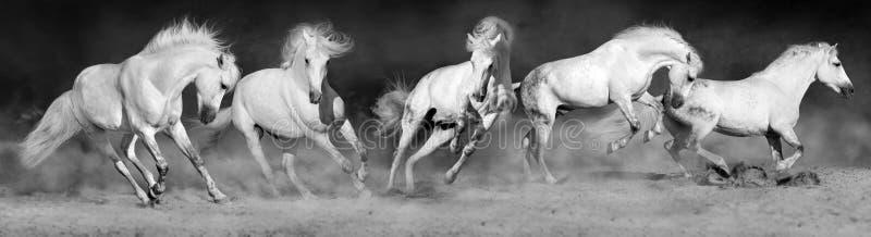 Het panorama van de paardkudde stock afbeeldingen