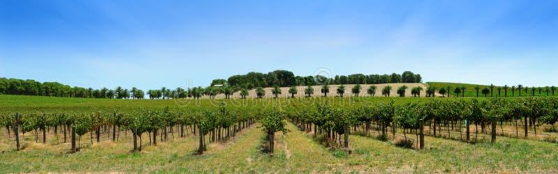 Het Panorama van de wijngaard stock afbeeldingen