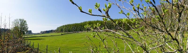 Het Panorama van het plattelandslandbouwbedrijf stock foto
