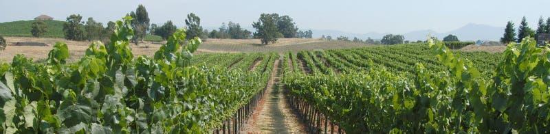 Het panorama van wijngaarden stock afbeelding