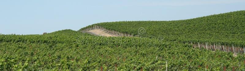 Het panorama van wijngaarden stock afbeeldingen