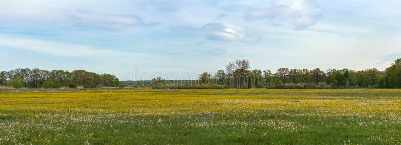 Het panoramamening van Nice aan weide met gele blowball, Tsjechisch landschap stock foto