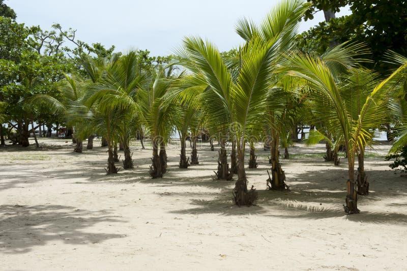 Het Paradijs Van De Palm Royalty-vrije Stock Fotografie