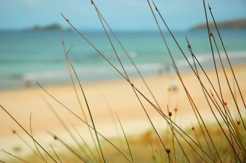 Het Paradijs van het strand stock foto's