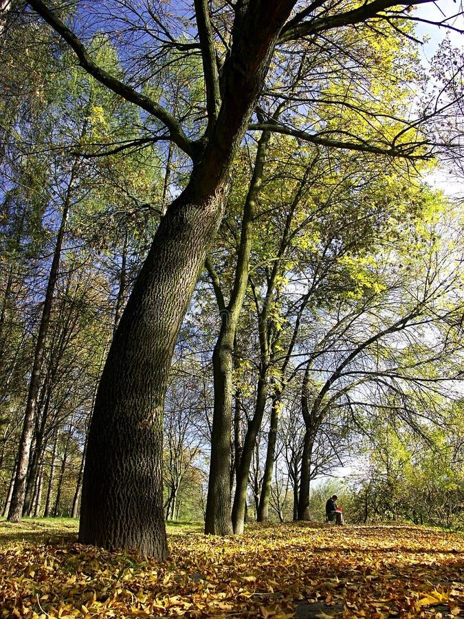Download In het park stock foto. Afbeelding bestaande uit rijk, abstractie - 279282
