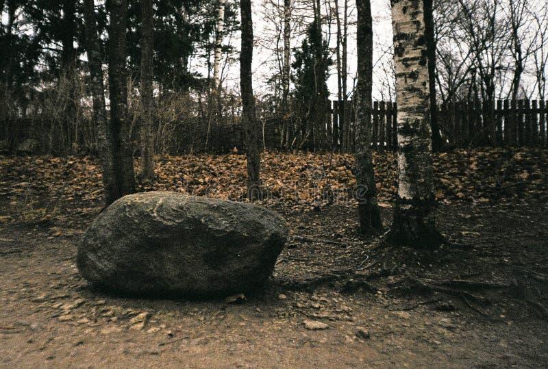 In het park stock fotografie