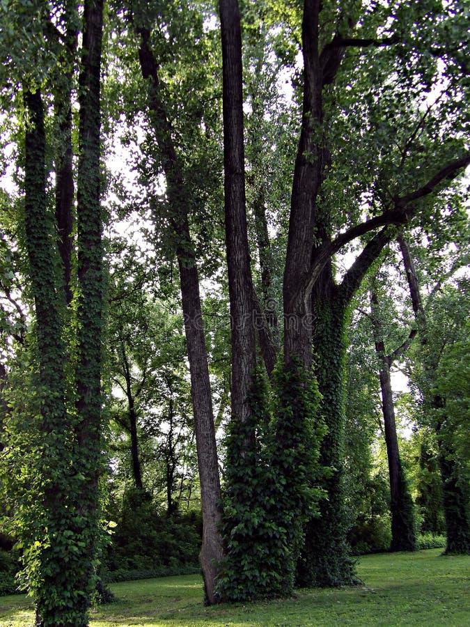 In het park stock foto
