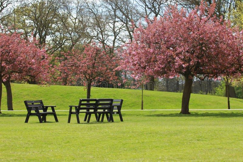 Het Park in Bloesem stock afbeeldingen