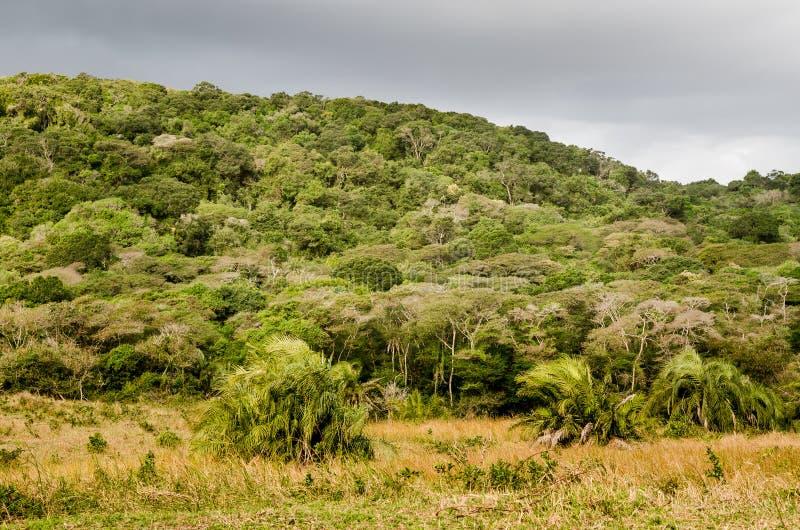 Het park bosvegetatie van het Isimangalisomoerasland Tuinroute Beroemde wijngaard Kanonkop dichtbij schilderachtige bergen bij de stock foto's
