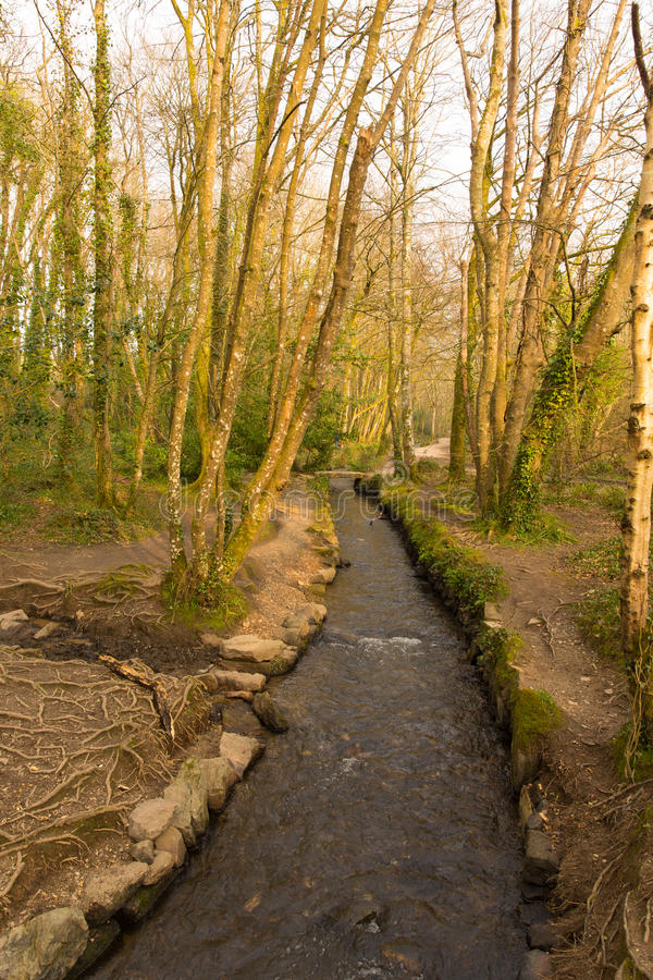 Het Park Cornwall Engeland het UK van het Tehidyland royalty-vrije stock foto