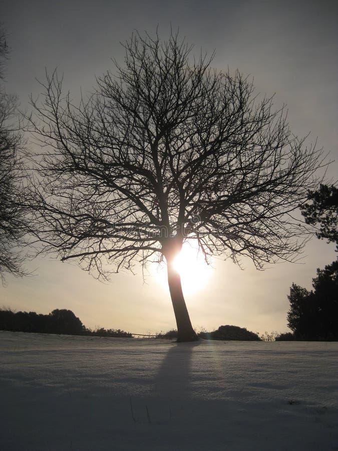 Het Park Dublin, Ierland van Phoenix in de sneeuw royalty-vrije stock afbeeldingen