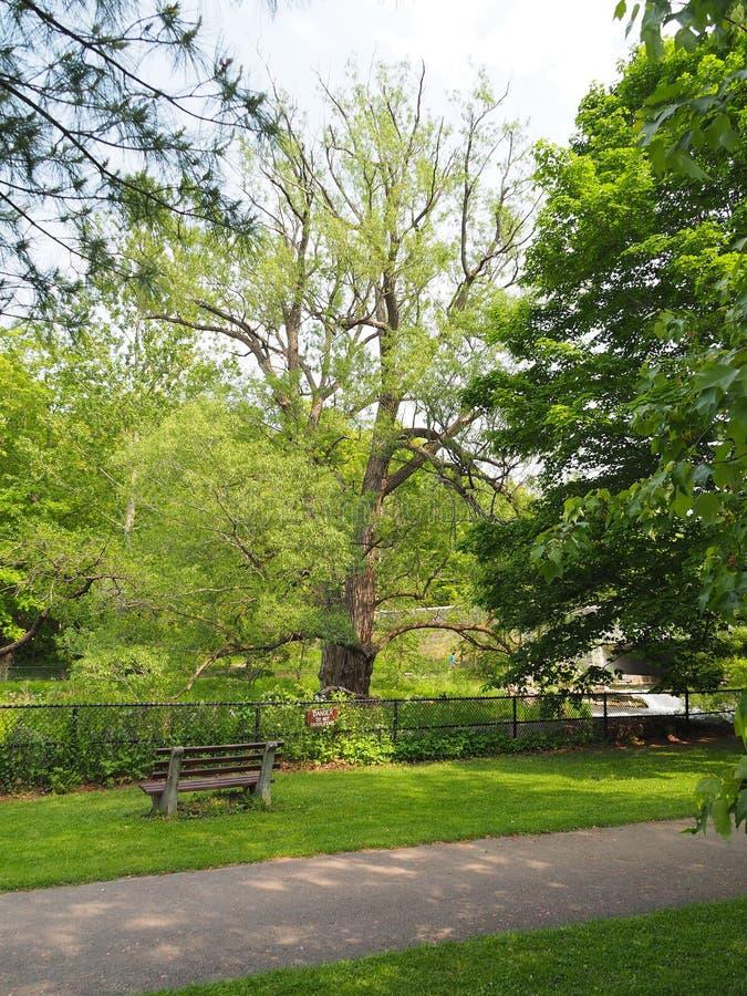Het Park grote boom van de Staat van Chittenangodalingen royalty-vrije stock foto