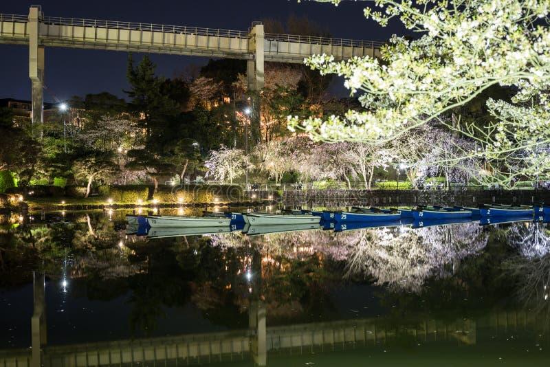 Het park van Chiba in de avond met bloeiende verlichte bomen stock fotografie