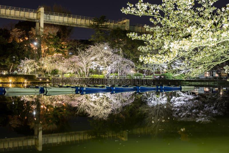 Het park van Chiba in de avond met bloeiende verlichte bomen stock afbeeldingen