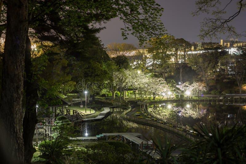 Het park van Chiba in de avond met bloeiende verlichte bomen royalty-vrije stock fotografie