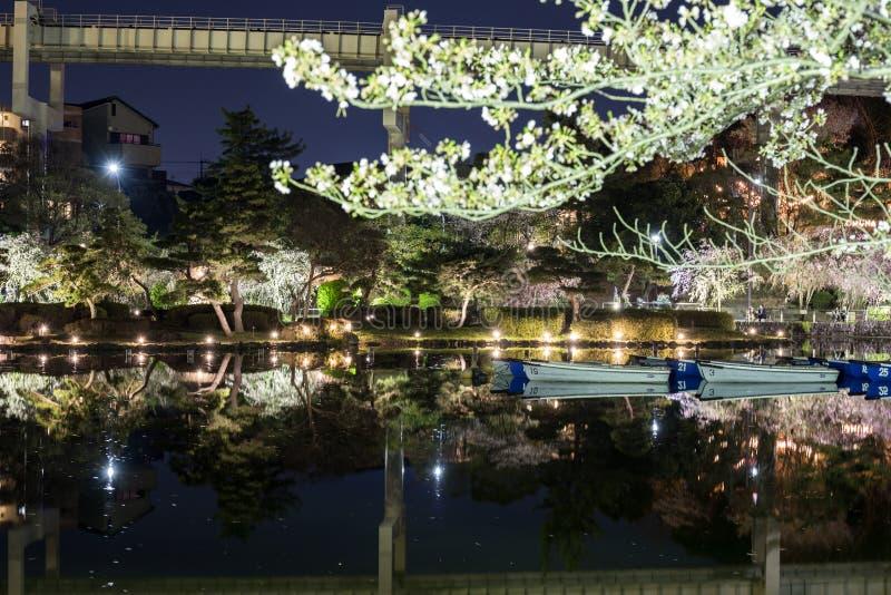 Het park van Chiba in de avond tijdens Hanami royalty-vrije stock afbeeldingen