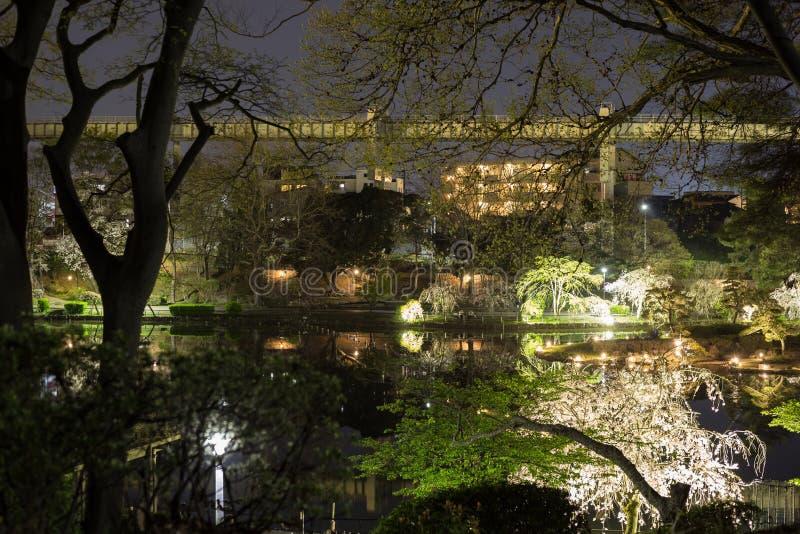 Het park van Chiba in de avond tijdens Hanami royalty-vrije stock foto