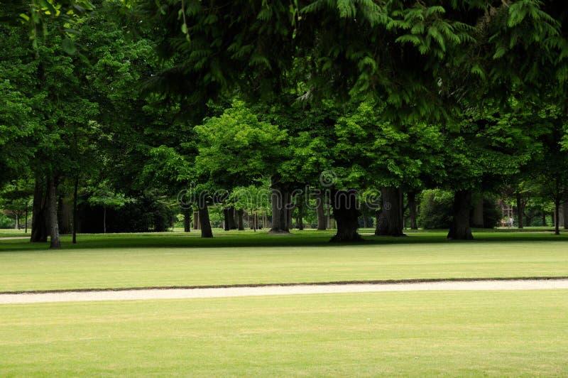Het Park van de ceder stock afbeelding