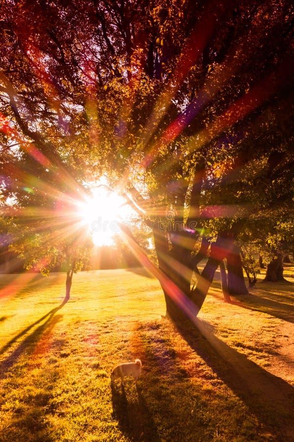 Het park van de de herfstzonsondergang stock fotografie