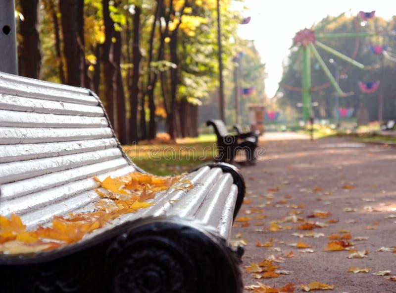 Het park van de herfst stock afbeeldingen
