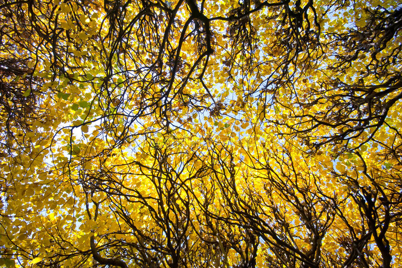 Het park van de herfst