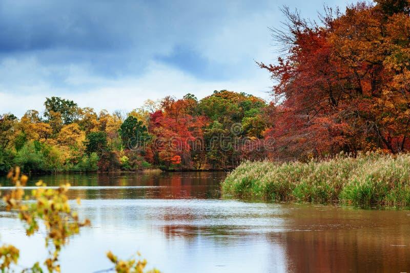het park van het de herfstlandschap met rivier en blauwe hemel stock fotografie