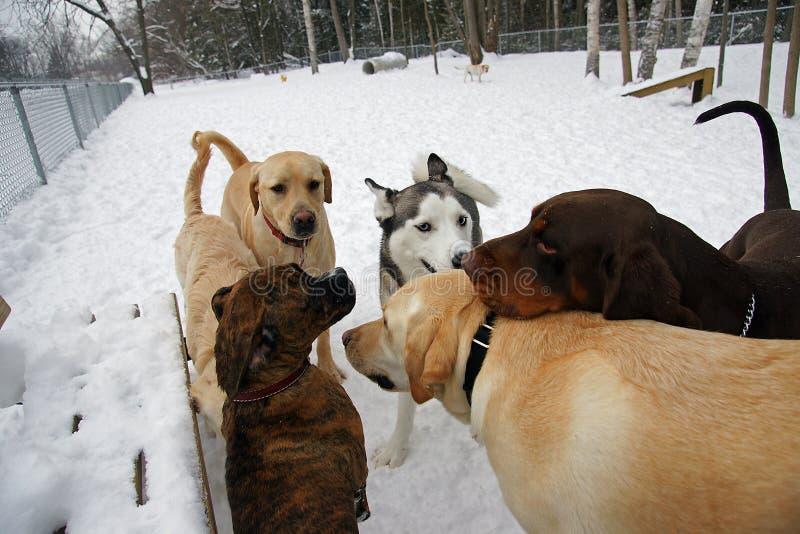 Het park van de Hond stock fotografie
