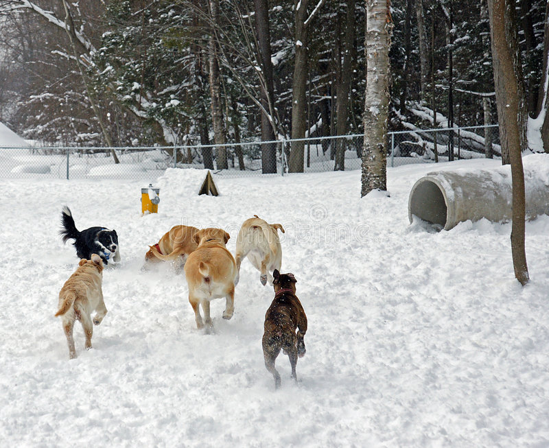 Het park van de Hond royalty-vrije stock fotografie