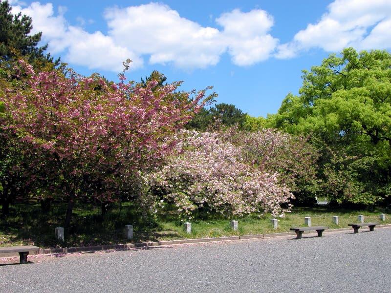 Het park van de lente stock afbeeldingen