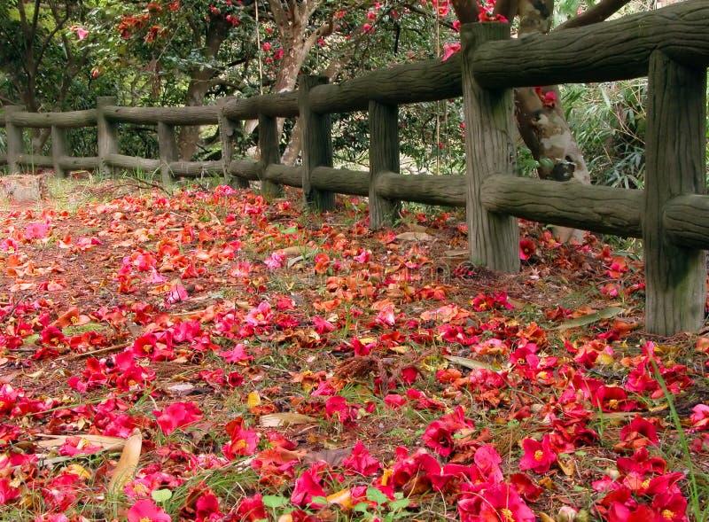 Het park van de lente royalty-vrije stock afbeeldingen