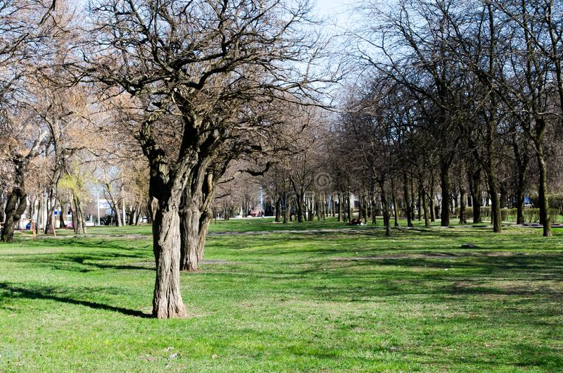 Het park van de lente Groen gras Gebied van gras Stedelijke aard in de lente Boom De schors van de boom Blauwe hemel royalty-vrije stock foto