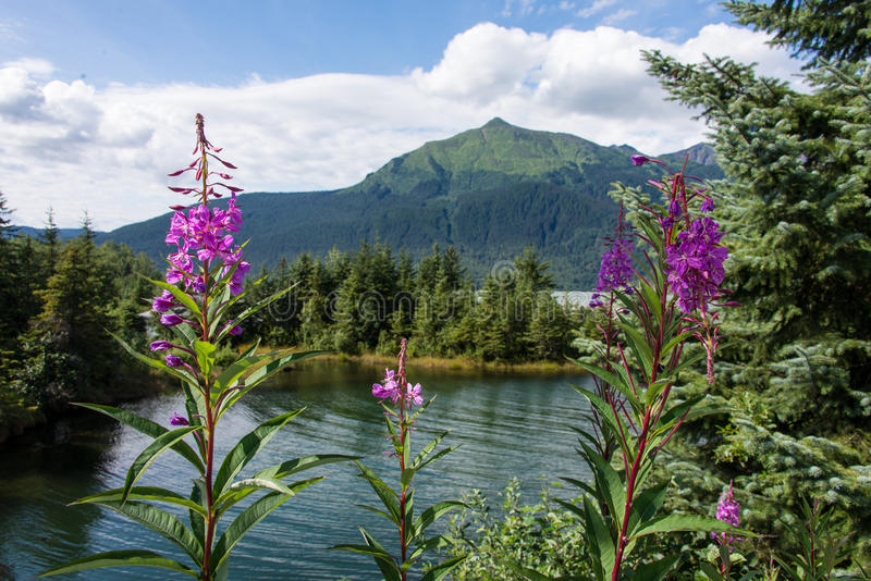 Het Park van de Mendenhallgletsjer, Juneau, Alaska stock afbeelding