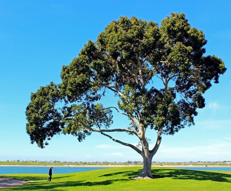 Het Park van de opdrachtbaai, San Diego, Californië royalty-vrije stock afbeelding