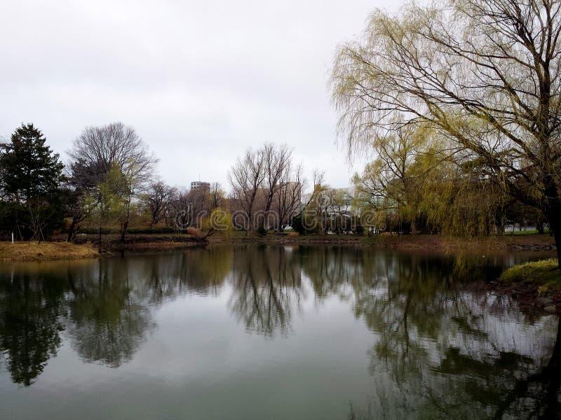 Het park van de Sapporostad in de vroege lente stock afbeeldingen