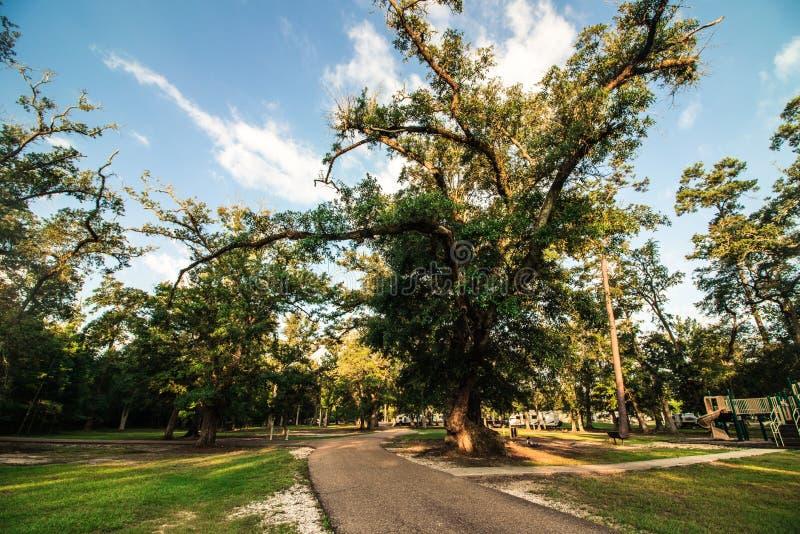 Het park van de staat van Louisiane stock fotografie