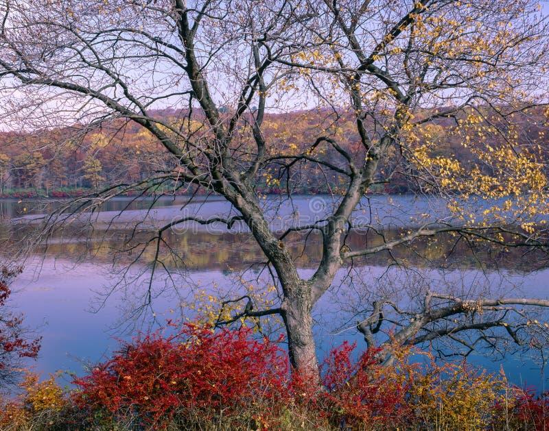 Het Park van de Staat van Harriman in de herfst stock fotografie